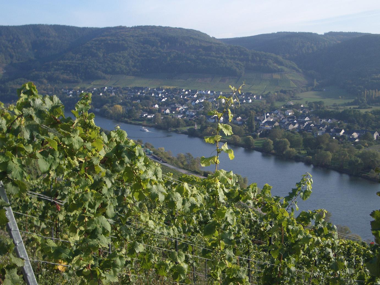 Weinberg Niederberg-Helden von Weingut Binz-Meyer